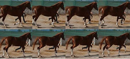 Diagnóstico e Abordagem do Equino Claudicante